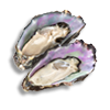 oysters_l